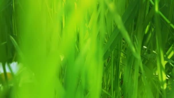 zöld fű közelsége