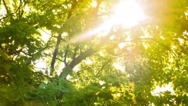 Paprsky světla prosvítají stromem