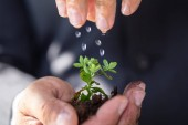 Fotografie Close-up Of A Persons Hand Watering To Sapling