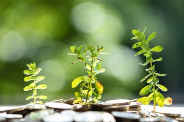 Close-up Of Fresh Green Plants Growing In Saving Coins