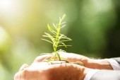 Fotografie Close-up Of A Businessmans Hand Holding Plant With Soil