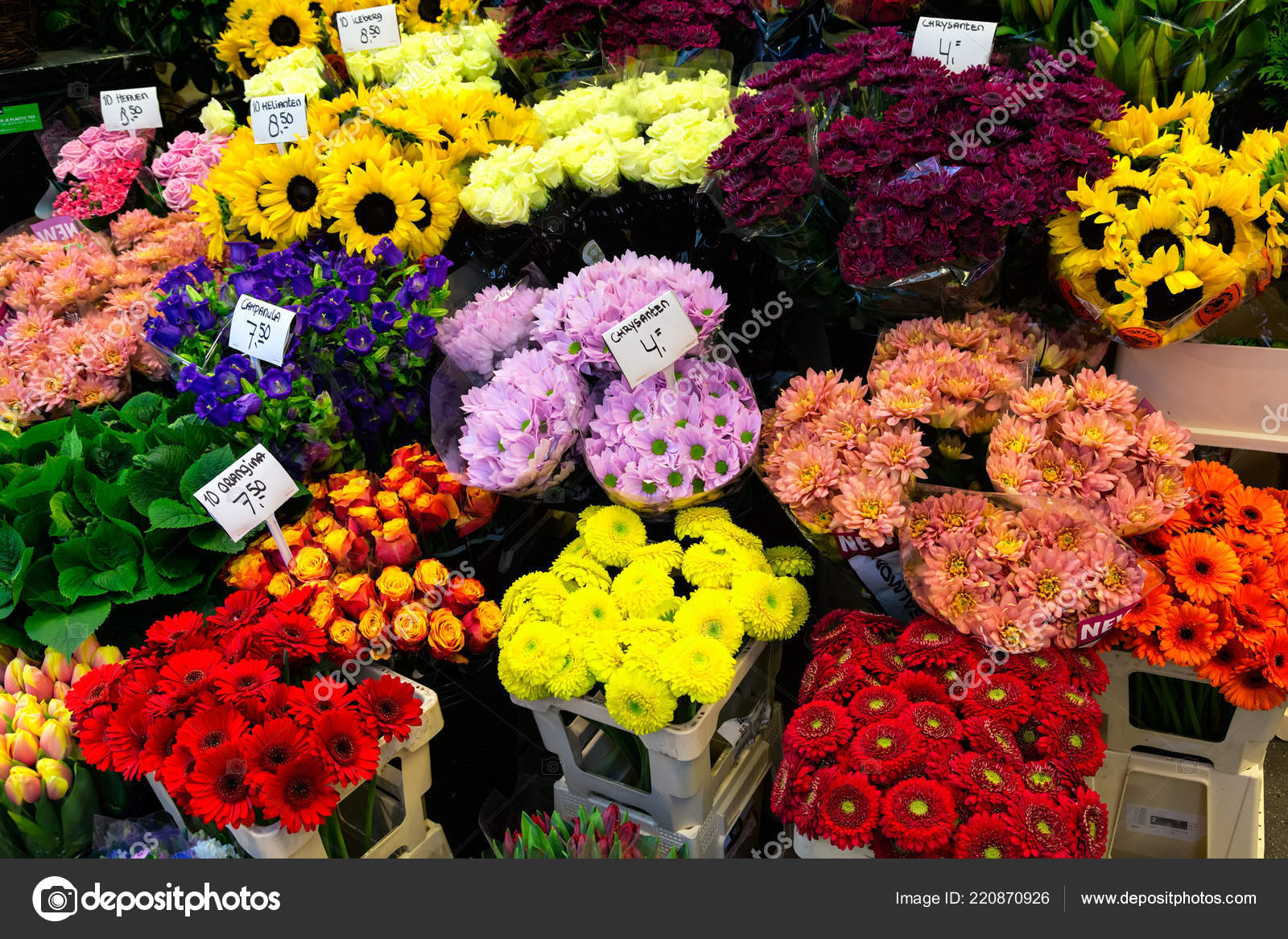 Amsterdam Netherlands April 2018 Colorful Chrysanthemums Sale Amsterdam Flower Market — Stock Photo