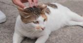 Fotografie Woman hand touching on street cat