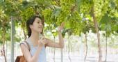 Fotografia Donna raccolta uve nella farm