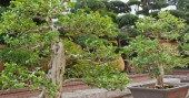 Fotografie Chinese potted plants in garden