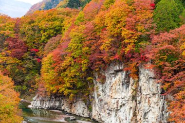 Beautiful Autumn forest and river in Japan