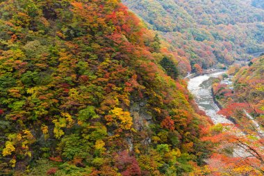 Autumn forest and river in Japan