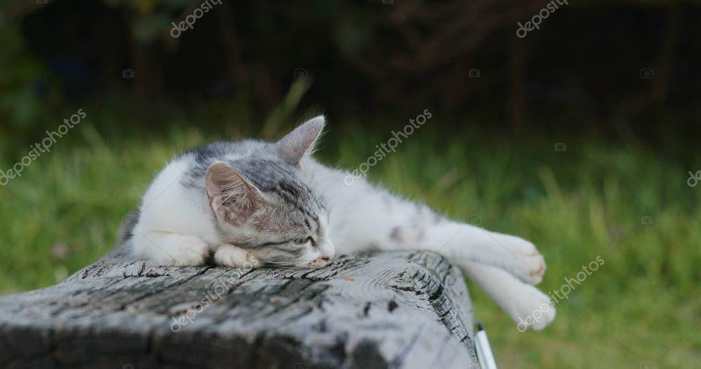 close up of   Street cat sleeping outdoors