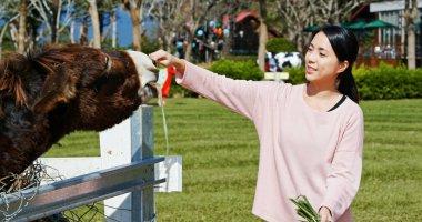 Woman feeding donkey in the farm