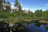 Fotografie Riedsee in Bad Wurzach ist eine Stadt in Bayern, Deutschland, mit vielen wunderbaren Landschaften
