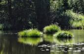 Fotografie Riedsee in Bad Wurzach ist eine Stadt in Bayern, Deutschland, mit vielen wunderschönen Landschaften