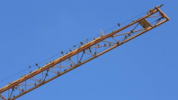 Vögel sitzen auf einem gelben Kranausleger und säubern das Gefieder