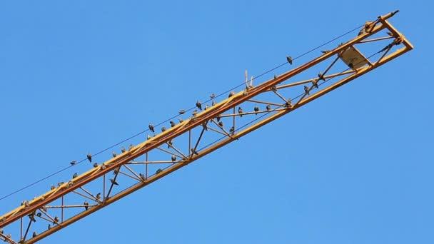 Ptáci sedí na žlutém výložcích jeřábů a čistí peří
