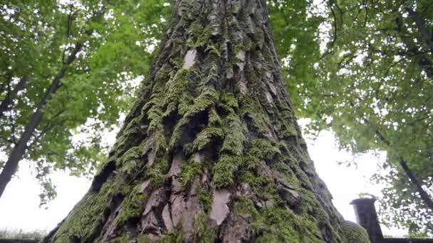 Mohos fa alsó