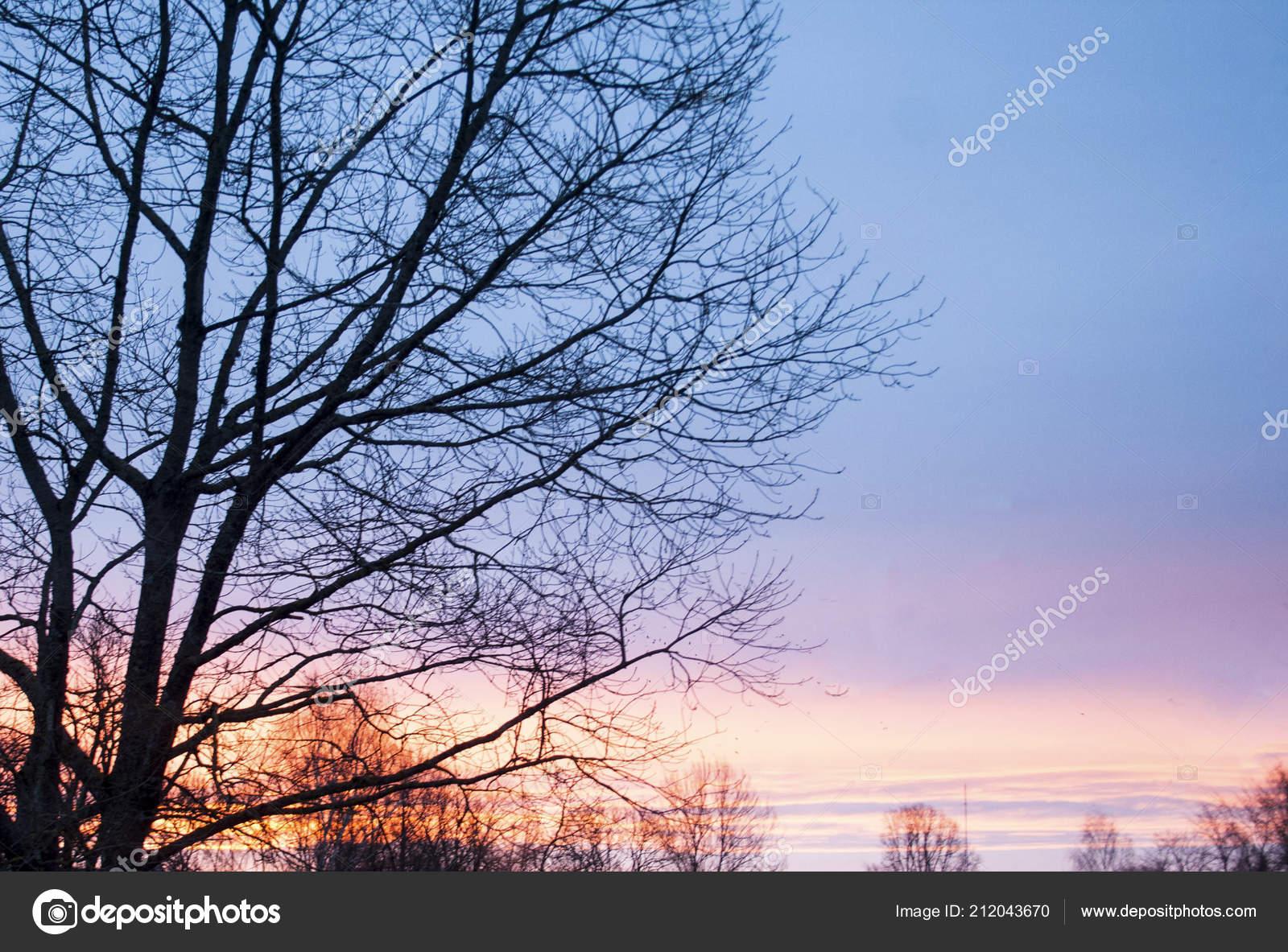Trame Silhouette Des Arbres Sur Fond Ciel Bleu Rose Dans
