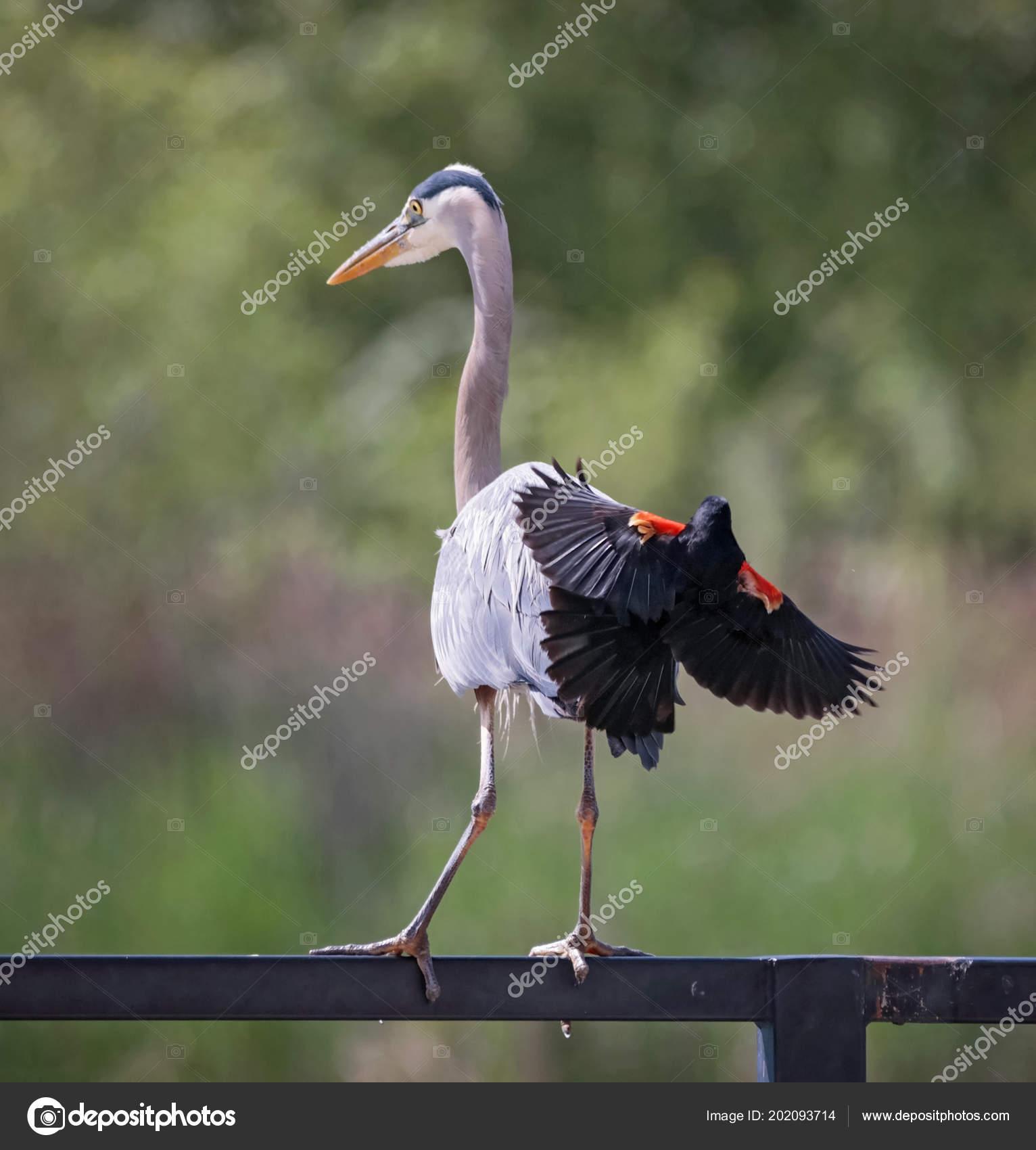 Πώς να πάρει ένα μεγάλο πουλί