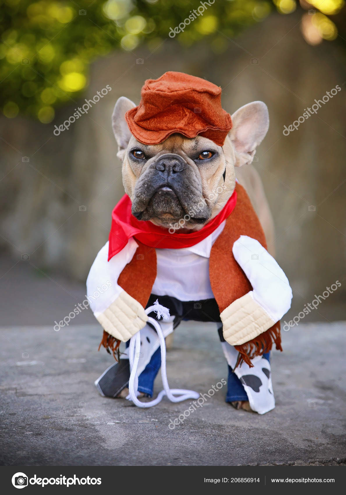 French Bulldog Terrier Dressed Cowboy Outfit Lariat Lasso Stock