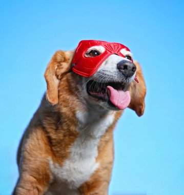 cute beagle with a super hero mask on and her tongue out against a blue sky