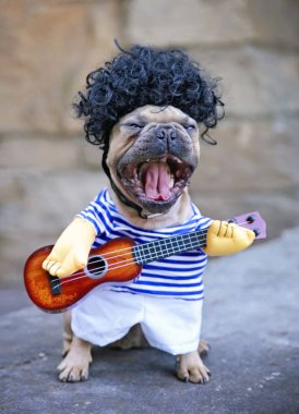 french bulldog terrier playing a guitar and singing outdoors