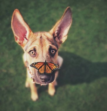 a cute dog in the grass at a park during summer with a butterfly on his nose