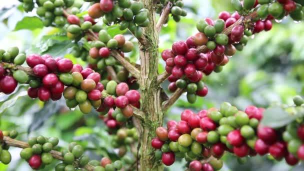 Kolumbijská káva z horského statku
