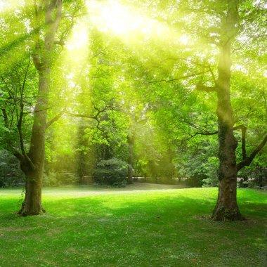 Sunlight through leaves trees in summer park. stock vector