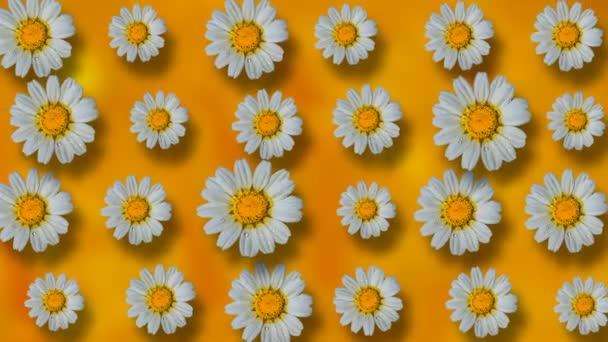 Květinový vzor bílé heřmánkový květ na žlutém podkladu