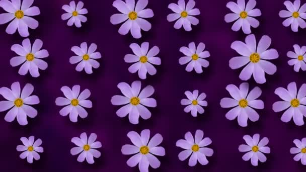 Floral pattern of Cosmos flowers on purple background