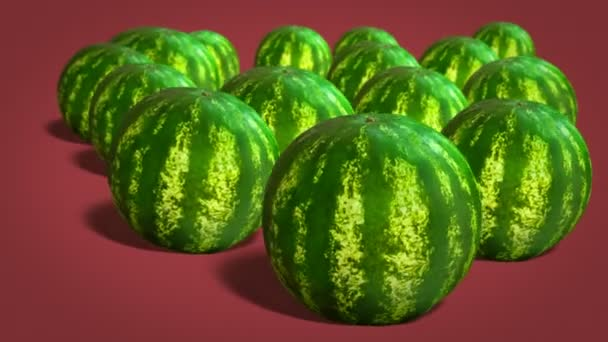 Ripe whole watermelons  on red background close-up. 4k video.