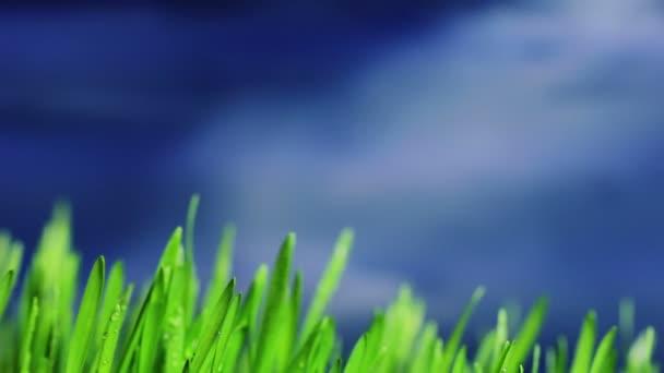 zöld fű részlete