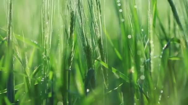 Ranní Rosa se blíží. Ekologické zemědělství a zemědělství