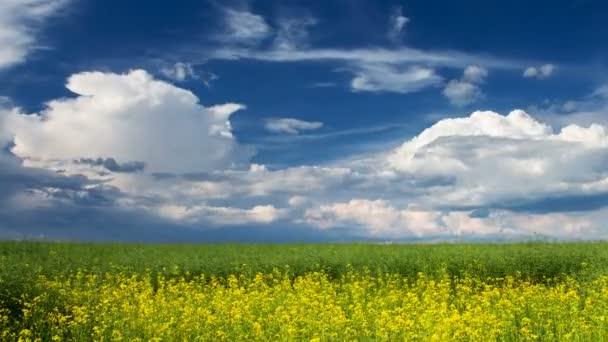 Rape field. Timelapse of beautiful summer landscape. 4K video.