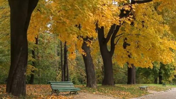 Maples a lavice v podzimním městském parku