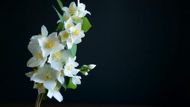 kvetoucí Jasmín květy