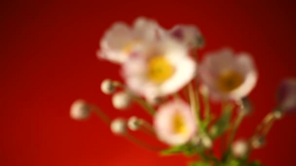 niedliche rosa Blumen auf rotem Hintergrund