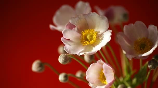 roztomilé růžové květy