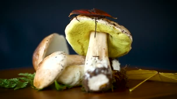 čerstvé přírodní houby hřib na černém lese