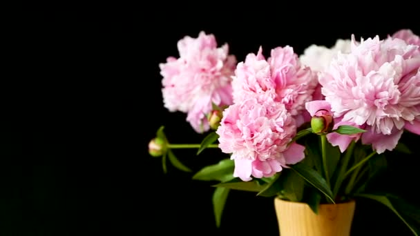 bouquet of blooming peonies on black background