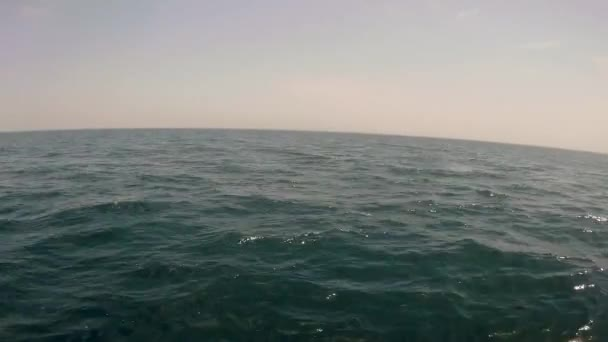 rybí pohled na moře
