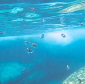 Unterwasserlandschaft mit tropischen Korallenfischen. Schwarm der Dicillus-Fische