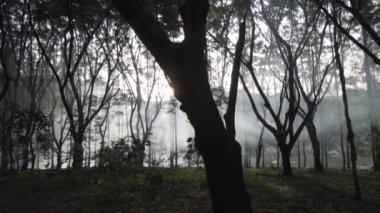 Beboste Pine forest silhouet bomen verlicht door gouden zonlicht ...