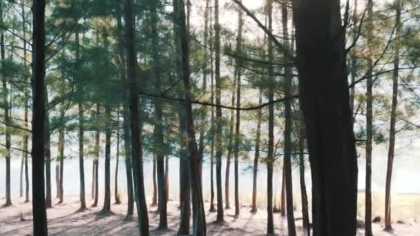 Krásný les se mlha/zalesněné lesy, stromy zpět prozářený sluncem před západem slunce s paprsky slunce nalil přes stromy na lesní půdě svítící větve stromu