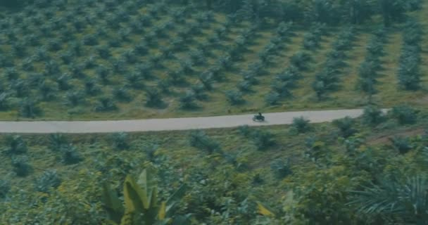 Zdarma motocykl jezdce/půdorys cool Traveler jízdě svůj chopper motorky na tropickém ostrově silnici - video v pomalém pohybu