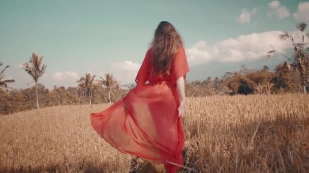 Beautiful woman in rice fields / Back view of beautiful young woman in red transparent dress walking along the rice field - video in slow motion