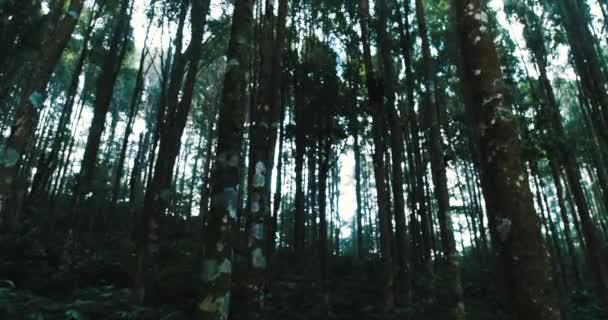 Az erdőben a fák / felvétel, a fák, az erdő, ég ellen
