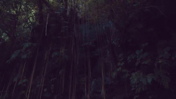 Šlahouny v dešti lesní džungle / Spodní pohled visí džungle révy v deštném pralese tropický ostrov Bali, Indonésie