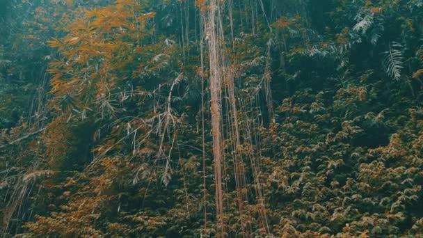 Pohled zdola zavěšené džungle vinice a tropických rostlin v deštném pralese exotický ostrov Bali, Indonésie