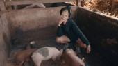 Beautiful fashion girl feeding piglets and posing in small dirty pig farm. Portrait of stylish hipster female