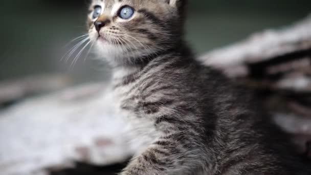 Kočička vid