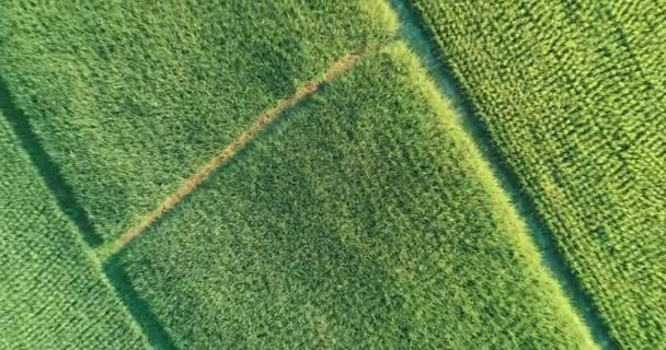 Aerial top view of beautiful fields in Chiang Rai area during sunny day, Thailand